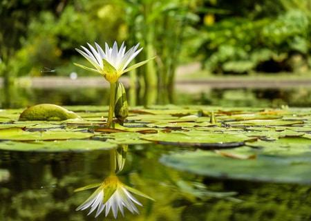 Eine Kräuterspirale mit Teich