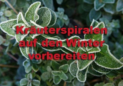 Wie bereitet man Kräuterspiralen auf den Winter vor?